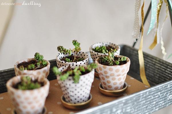 2 garden miniature succulent pots