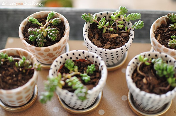 3 garden miniature succulent pots