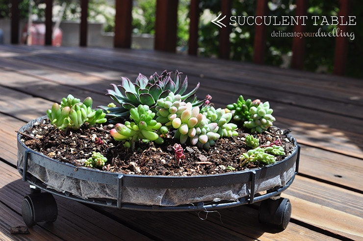 Succulent Table, Delineate Your Dwelling