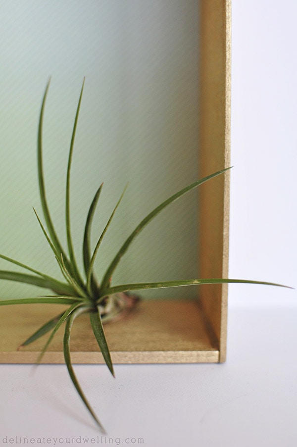 Balsa Wood House airplant