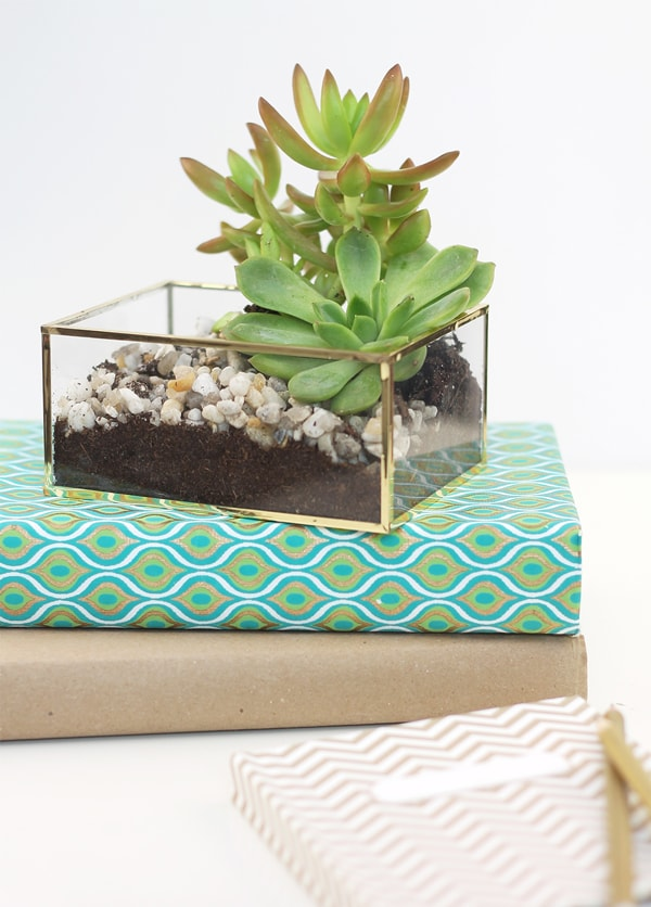 Gold Acrylic Planter, FeatureFriday