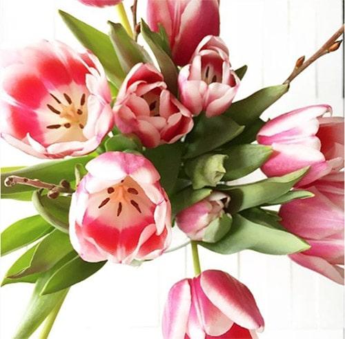 Flower Love 2 Tulips