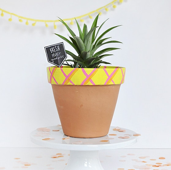 1 How to Grow a Pineapple