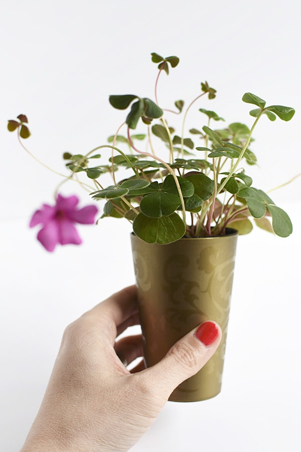 Four Leaf Clover Mini Planters : Perfect DIY Craft for St Patrick's Day, Delineate Your Dwelling