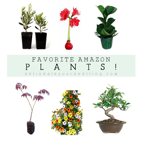 Amazon now carries PLANTS!